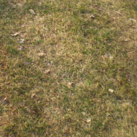 lawn during drought m
